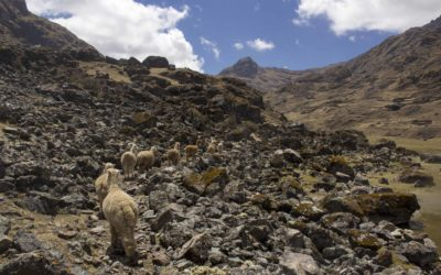 Photo Diary: Pisac's Three Lakes Hike
