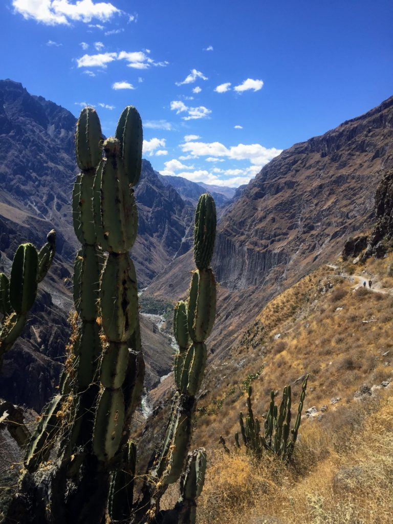 hiking in Colca Canyon in Peru
