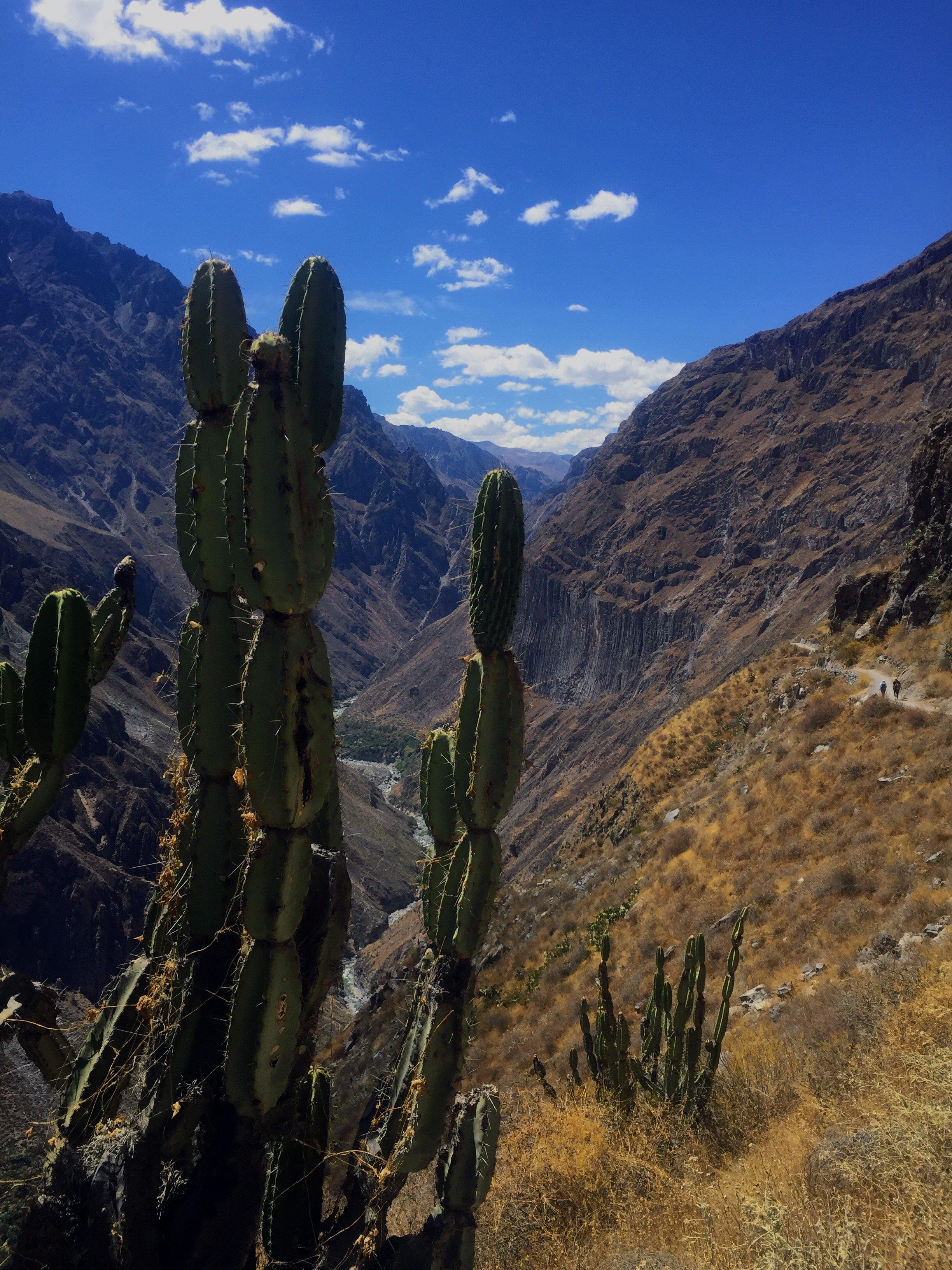 hiking in Colca Canyon in Peru