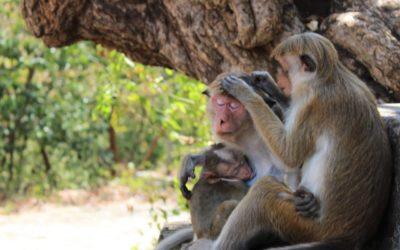 The Best Way to Travel Through Sri Lanka