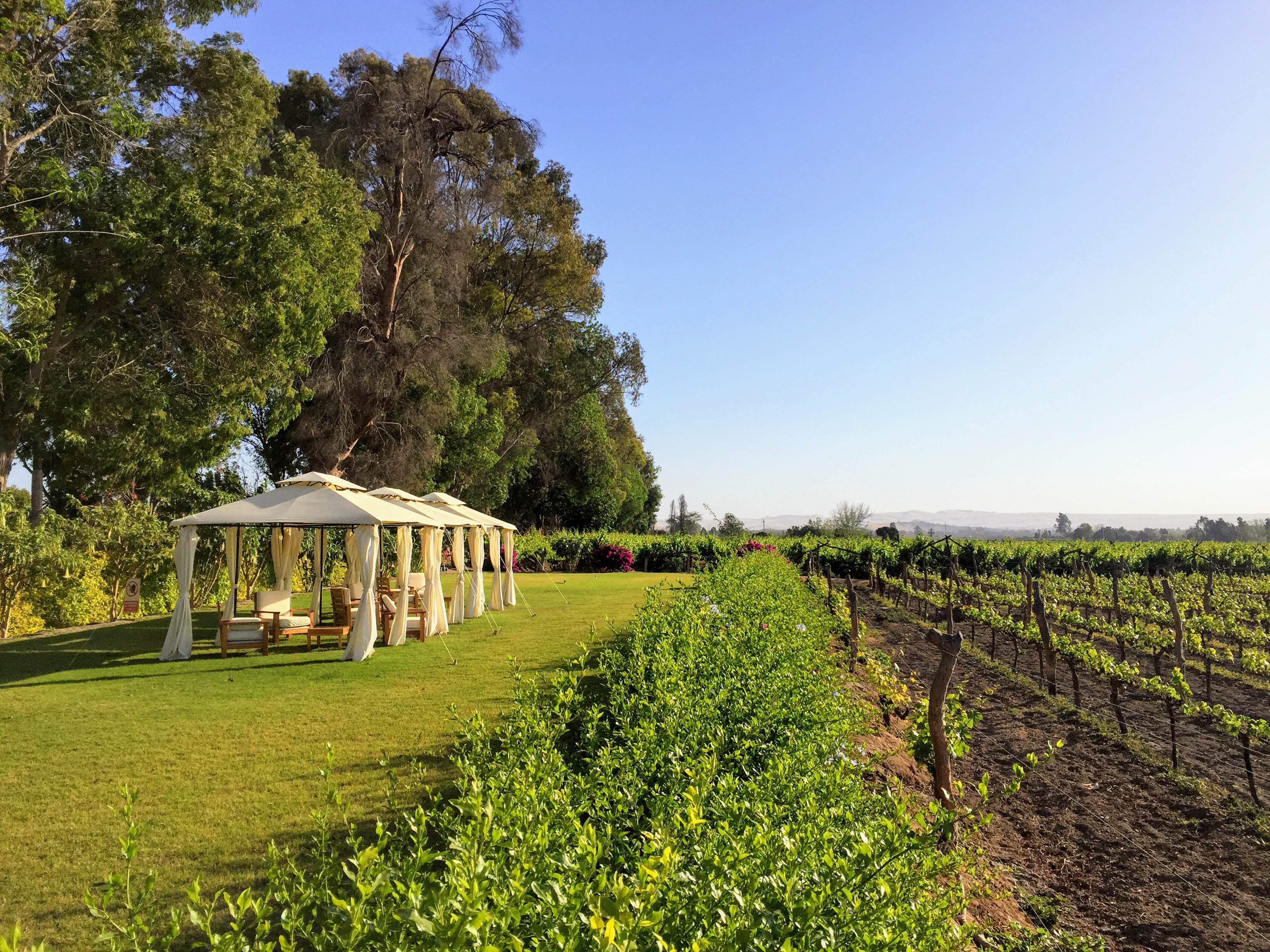 Tacama Winery, the oldest winery in the Americas