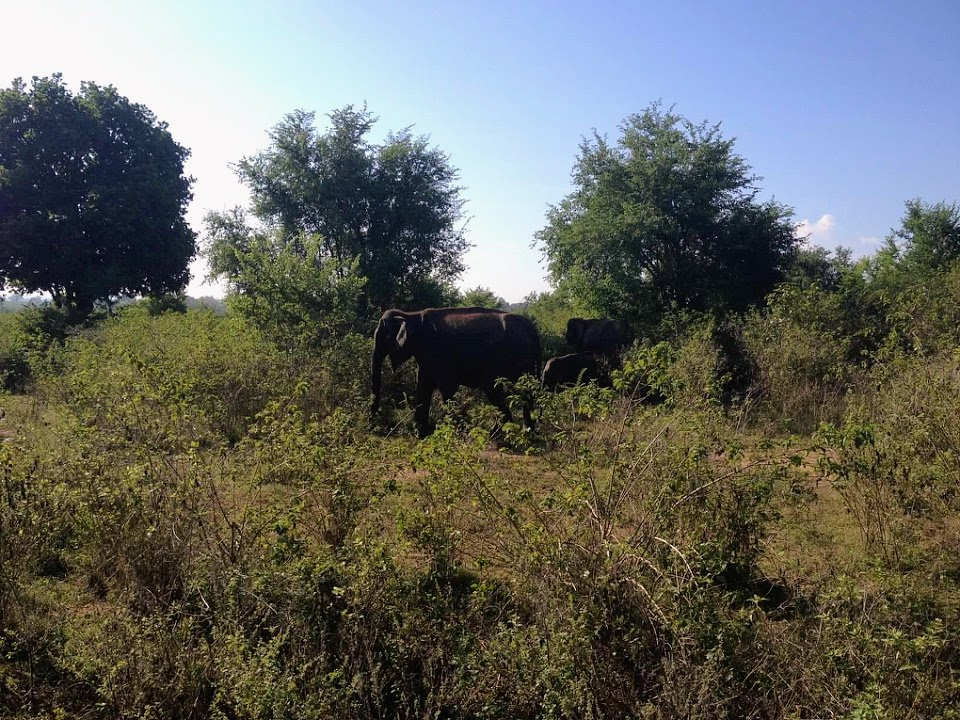 How to Do an Elephant Safari in Sri Lanka at Uda Walawe