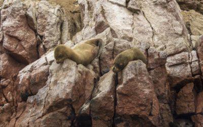 Islas Ballestas and Huacachina Oasis: A Photo Diary