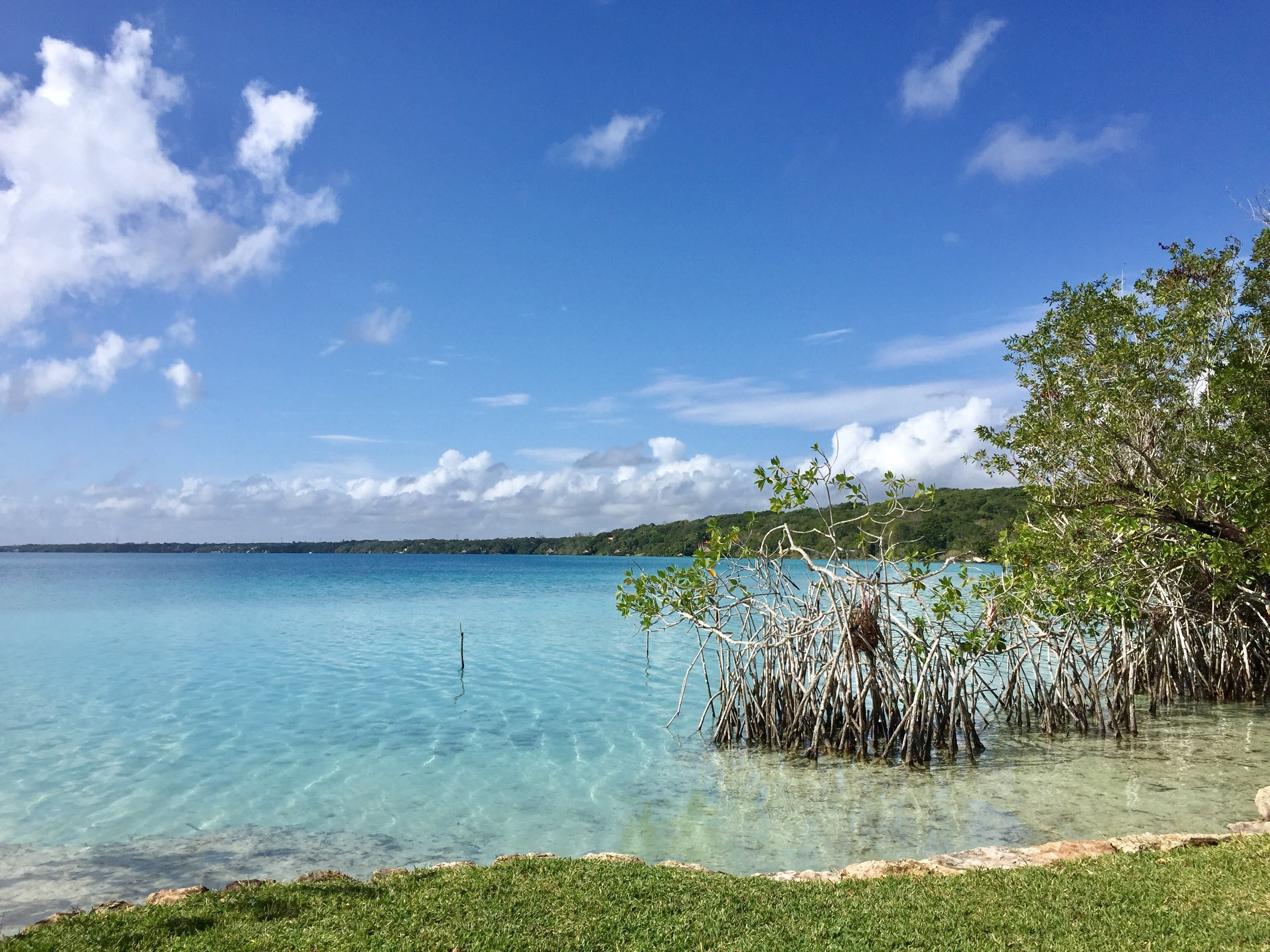 Shores of laguna bacalar