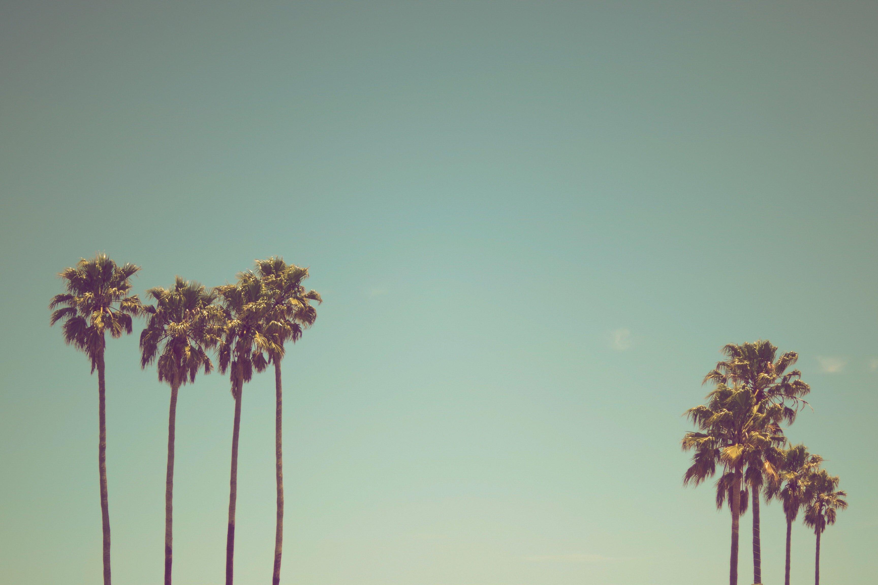 lone palm trees on a beach