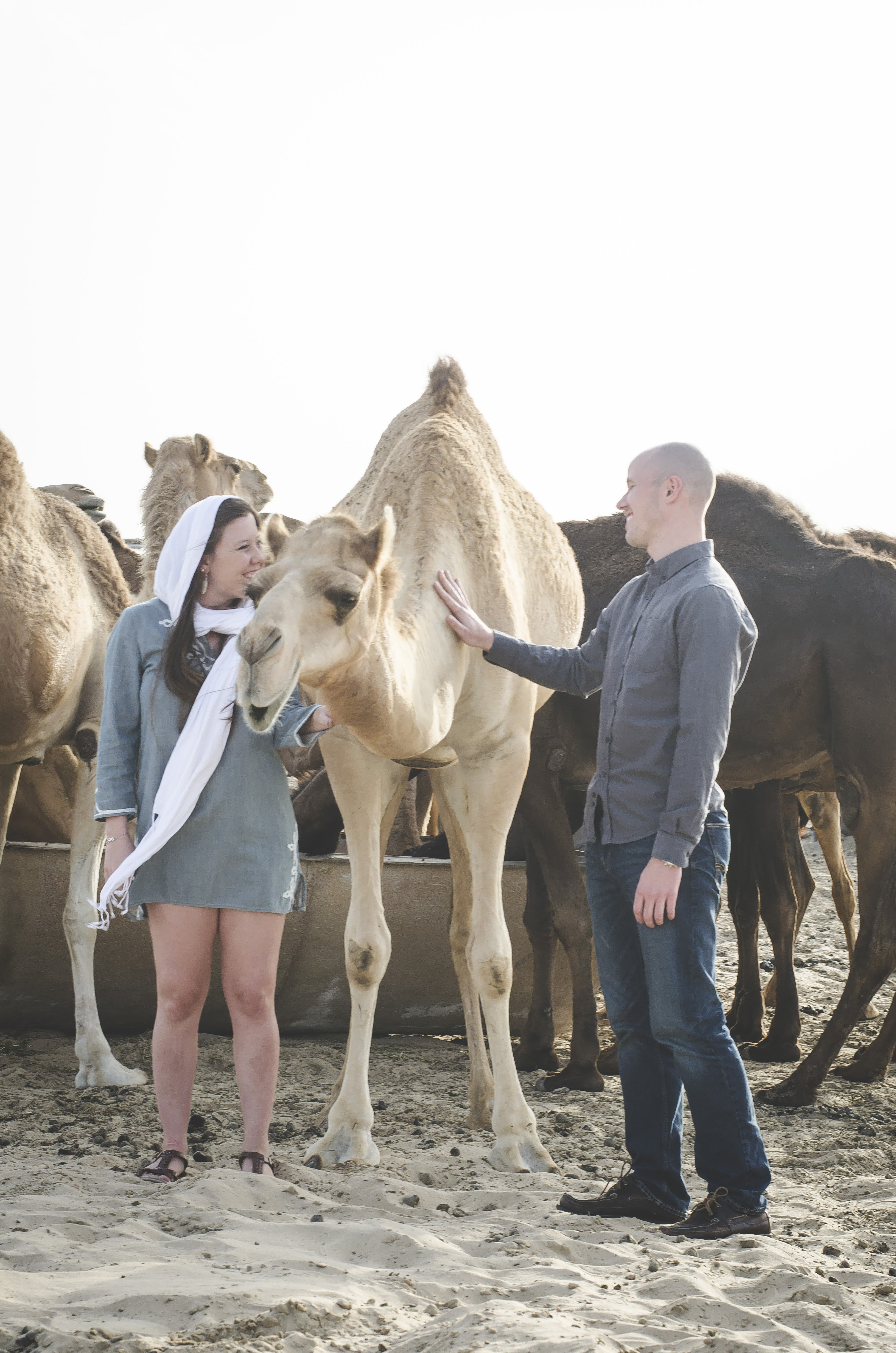 Abu Dhabi engagement photos with camels