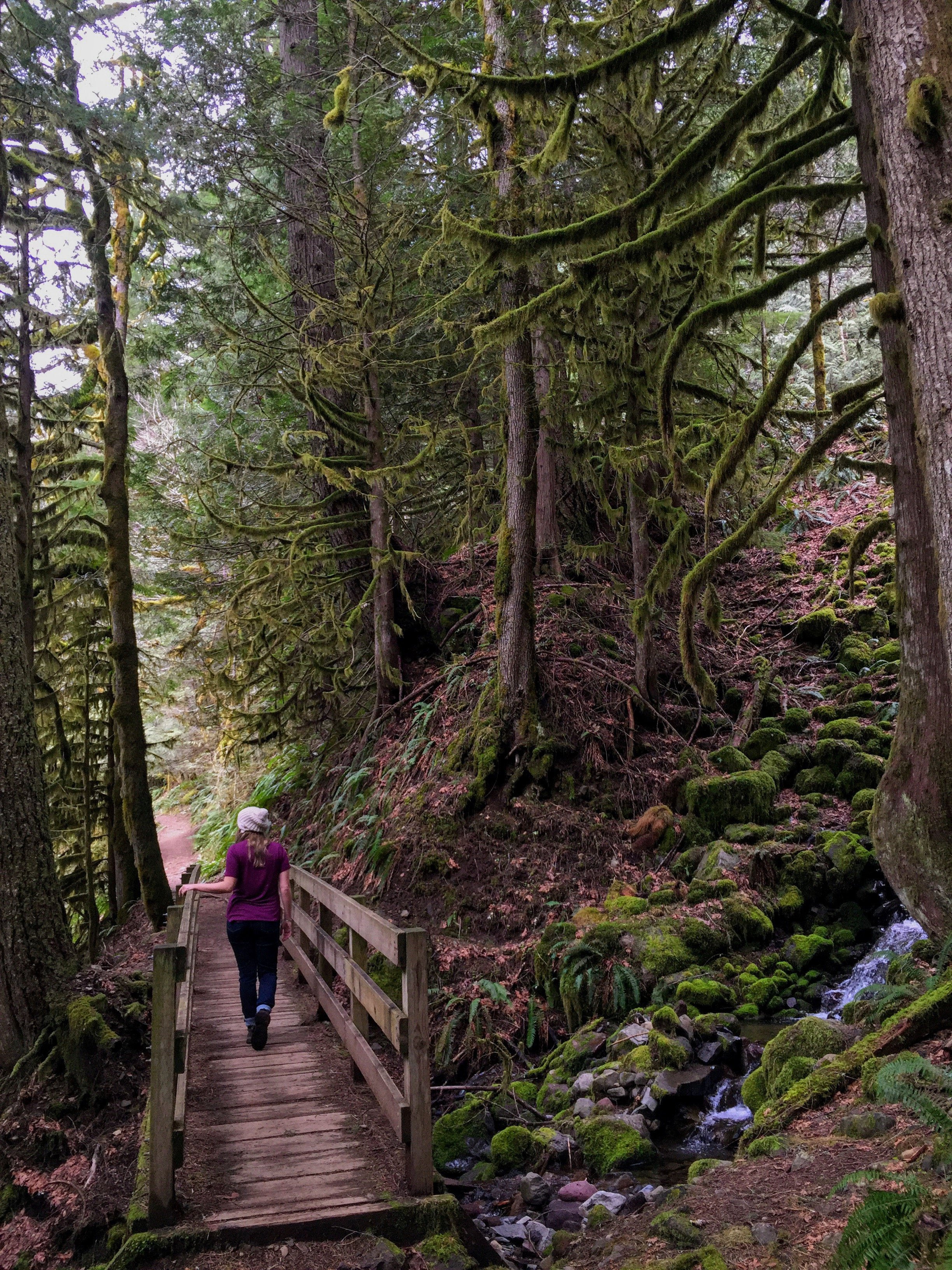 Old Salmon River Train, an easy hike in Mount Hood National Forest