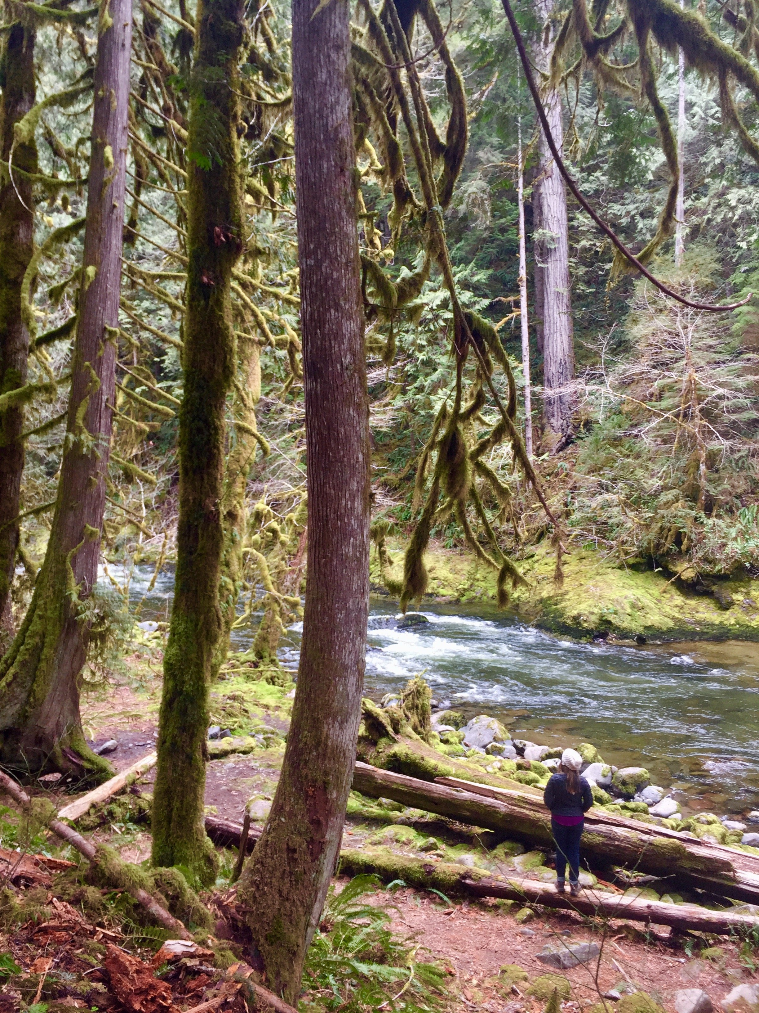 Hiking near Portland at Old Salmon River Trail