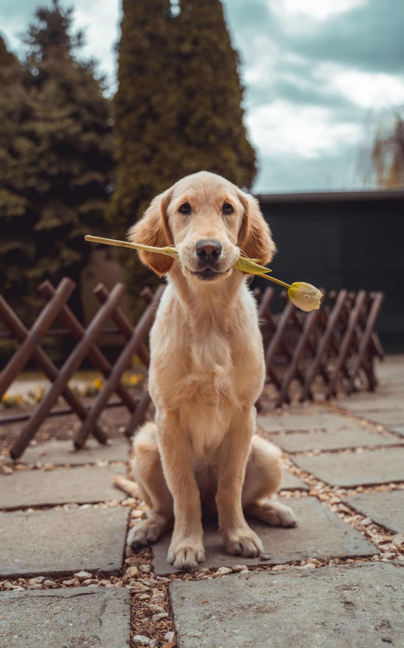 puppy holding a flower in his mouth
