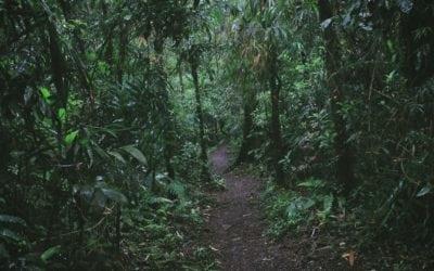 Lost in the Borneo Jungle: A Survival Story