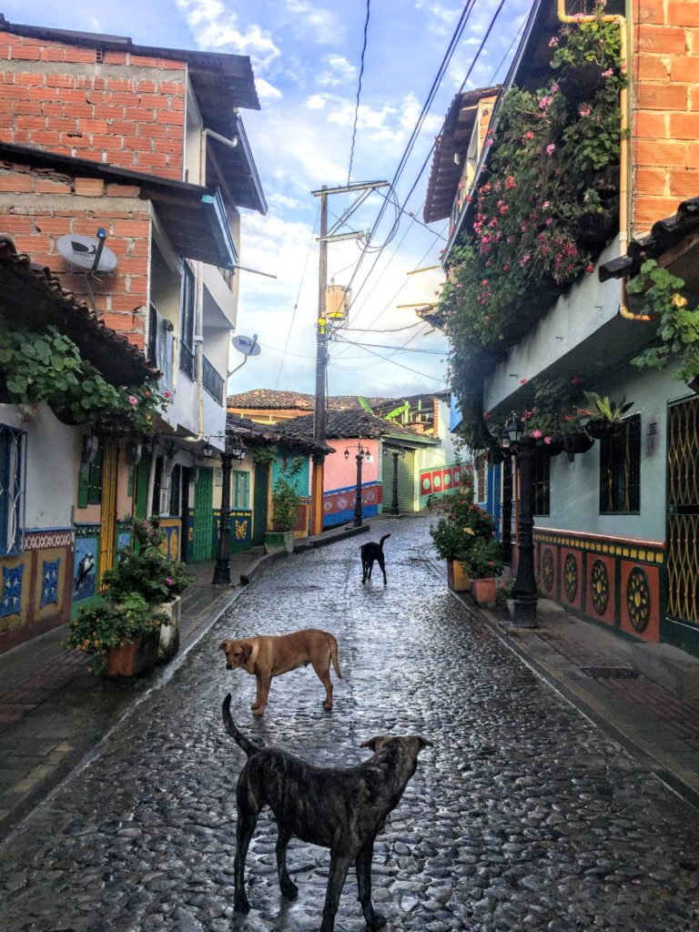 dogs on the streets of guatape