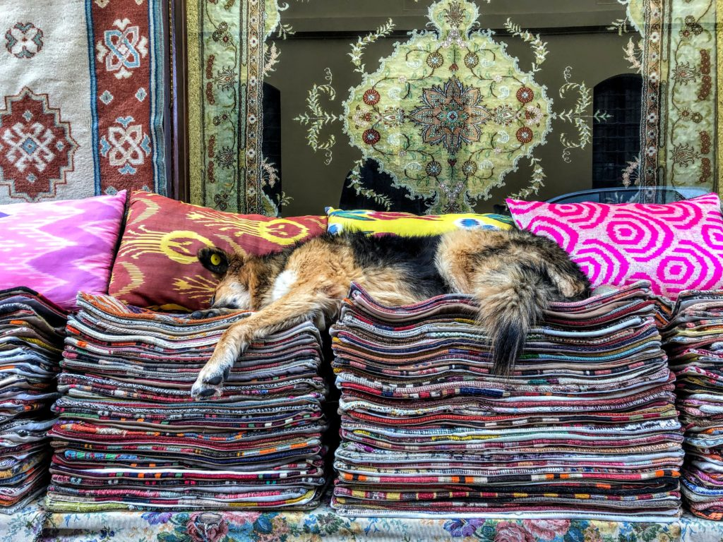 dog sleeping on carpets in istanbul