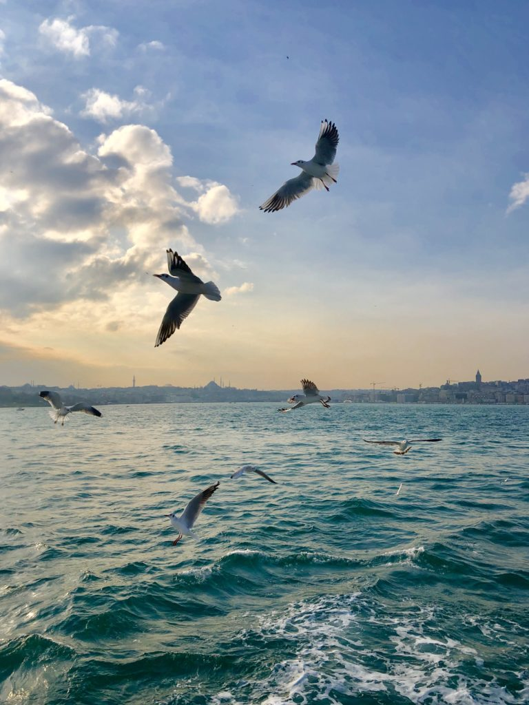 birds at sunset on the ferry in Istanbul