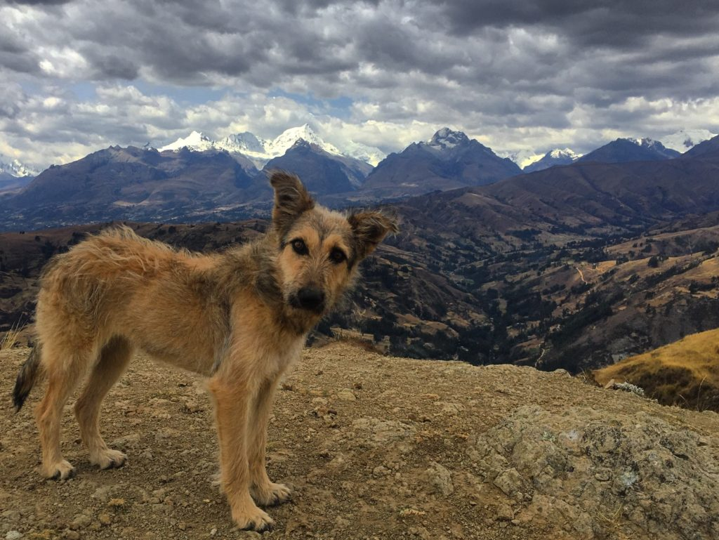 dog on top of a mountain in Peru
