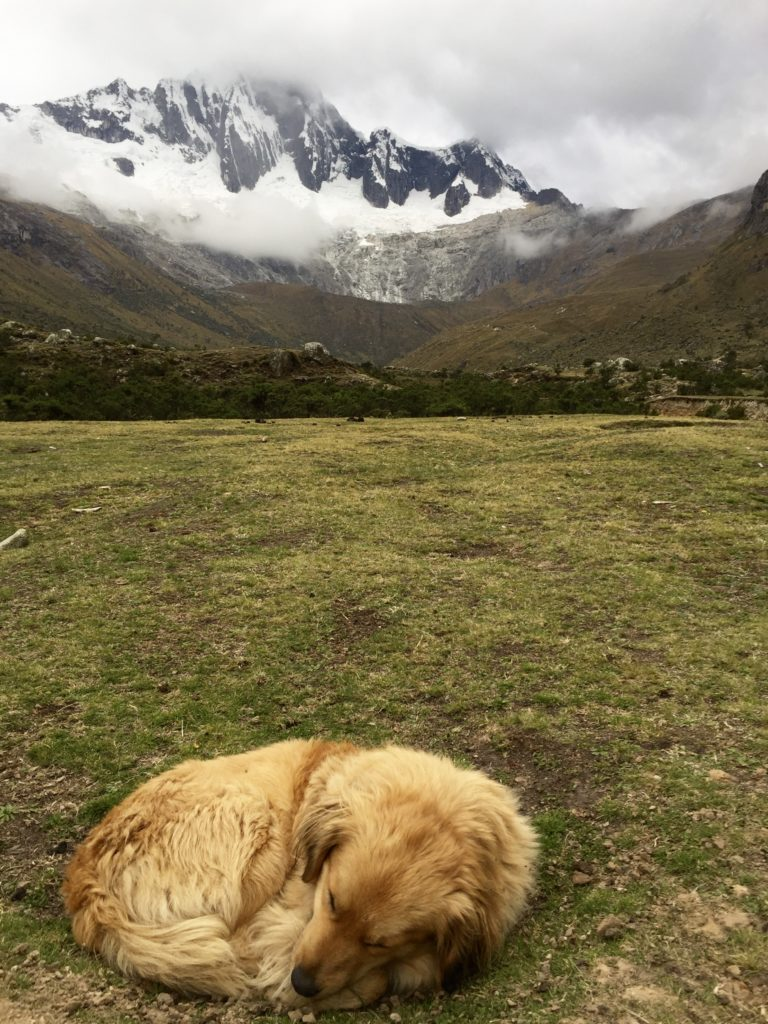 dog sleeping in front of a mountain in peru