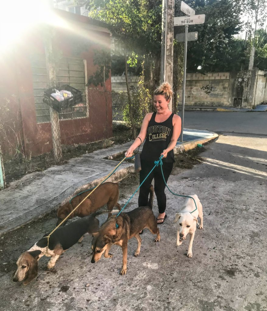 walking dogs at a shelter in Mexico