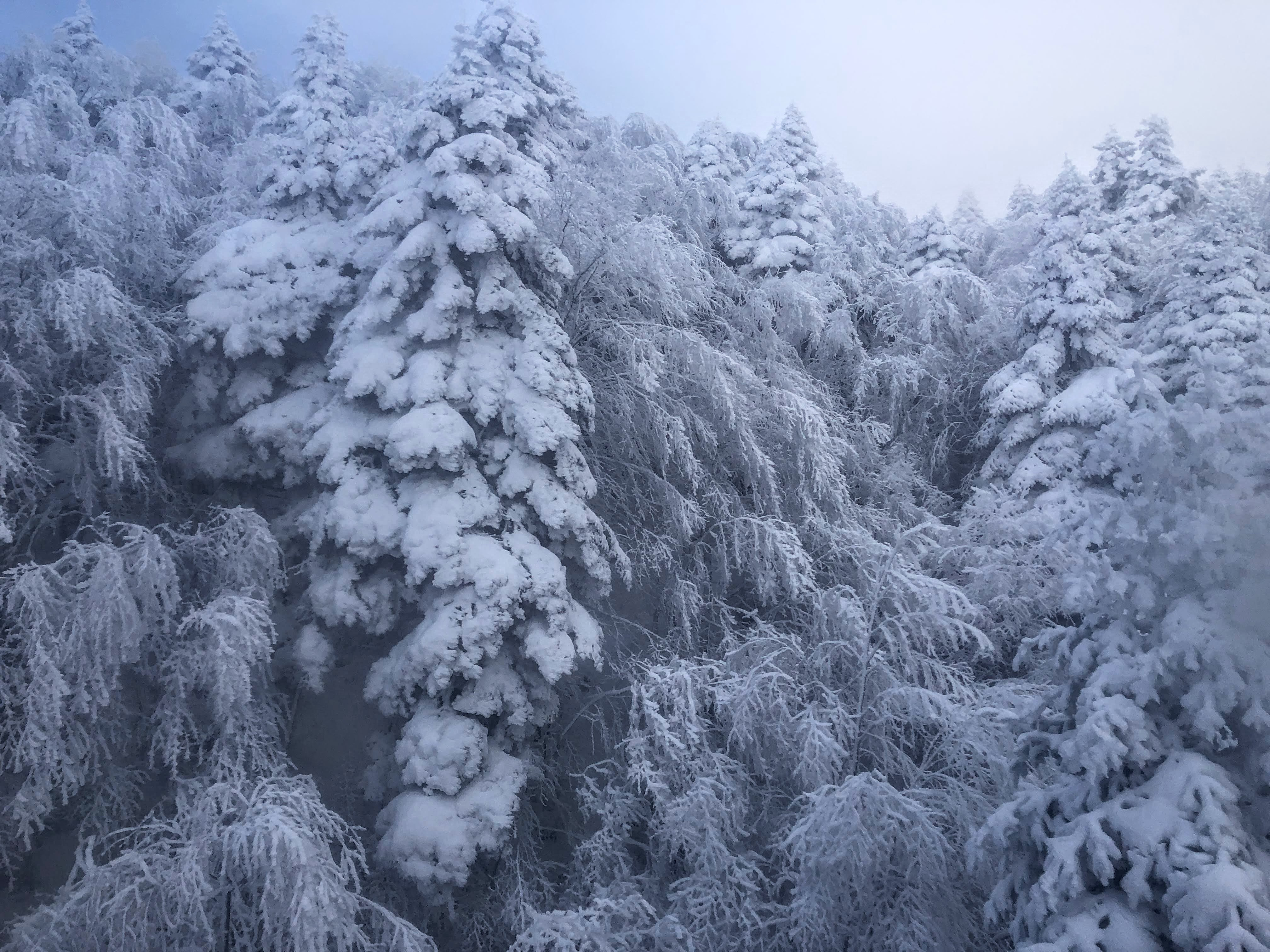snow covered trees in Uludag National Park
