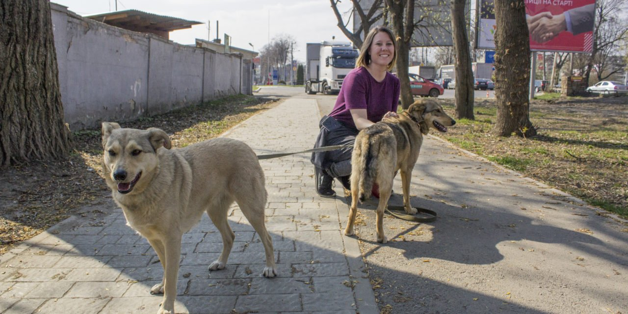 How to Volunteer at an Animal Shelter in Lviv, Ukraine