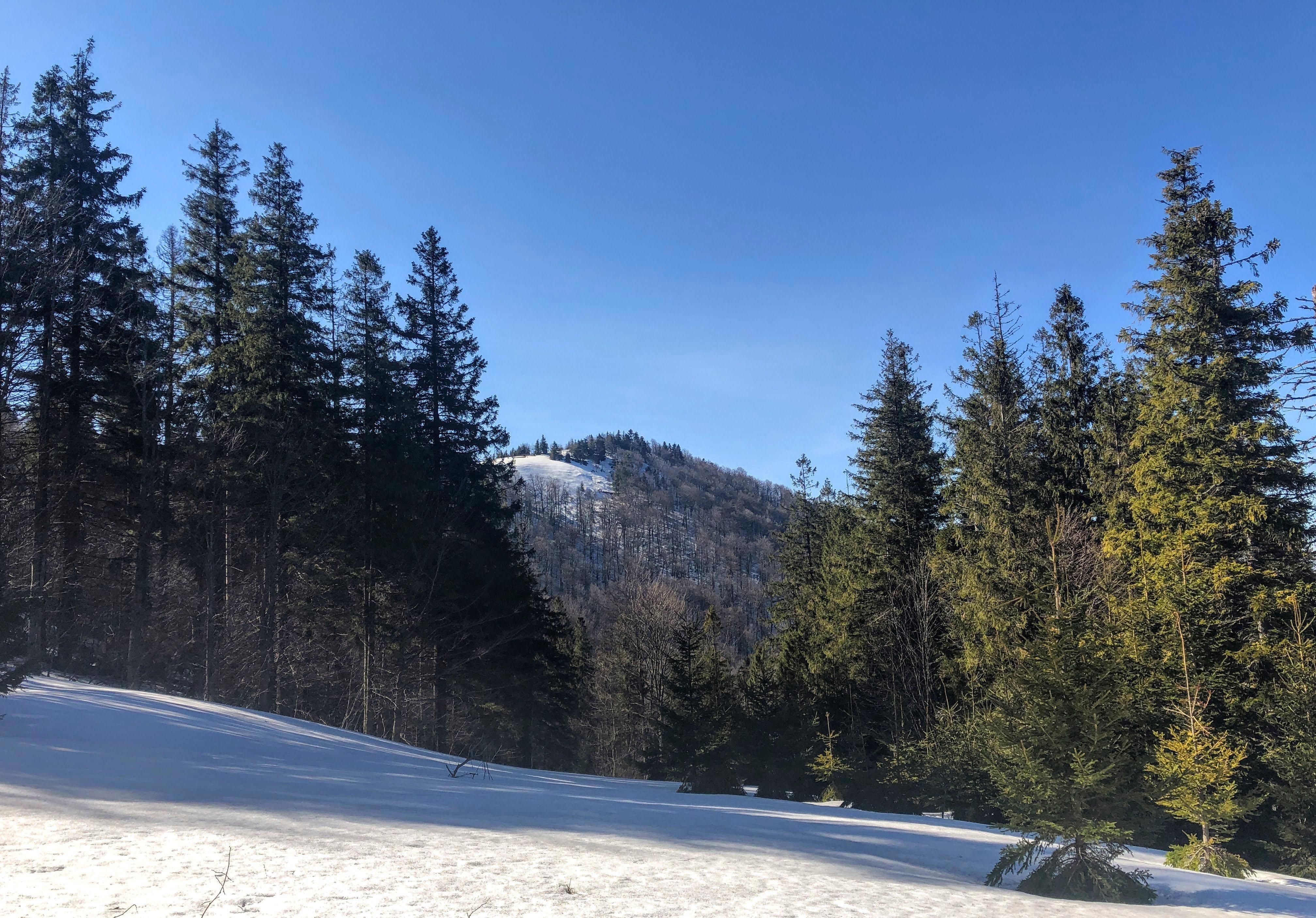 hiking on Mount Parashka in the Carpathian Mountains