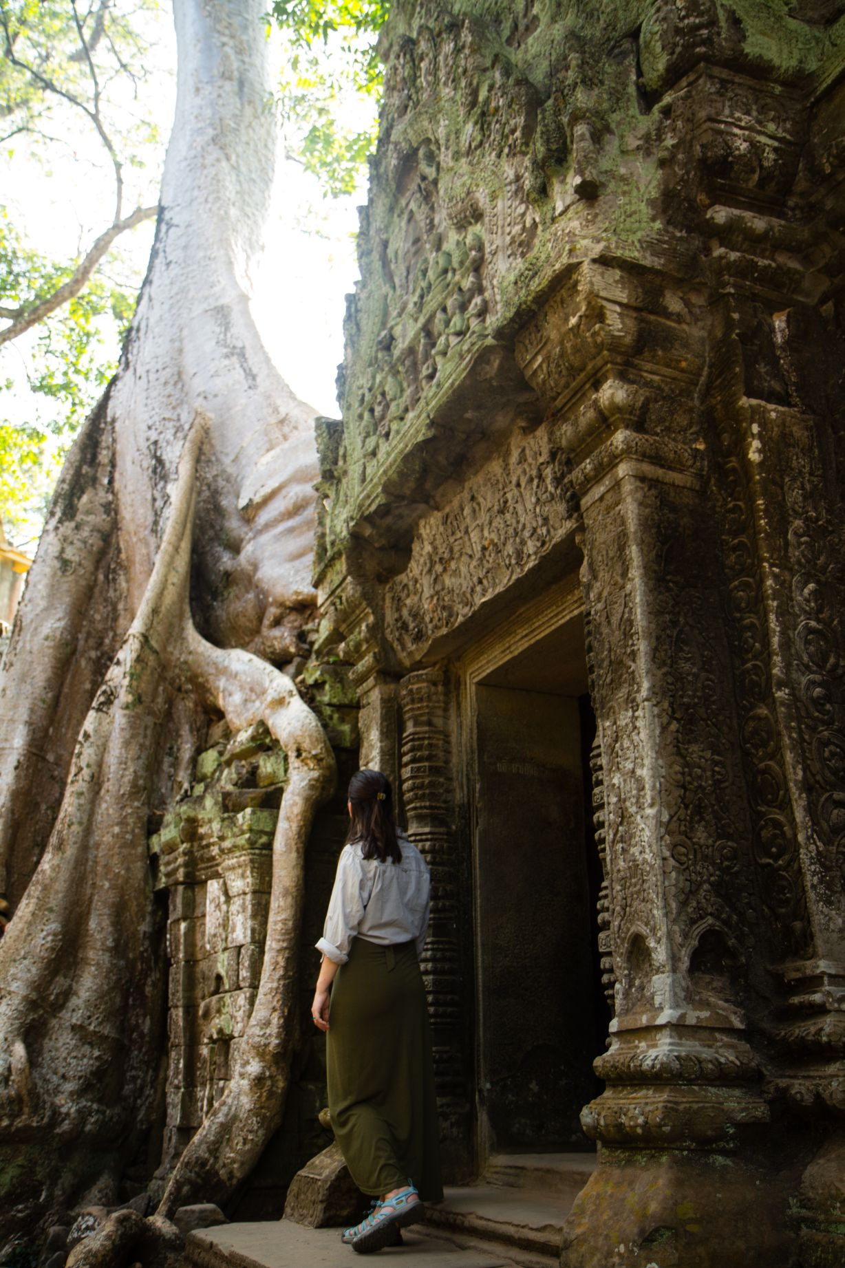 ruins and giant tree in Cambodia
