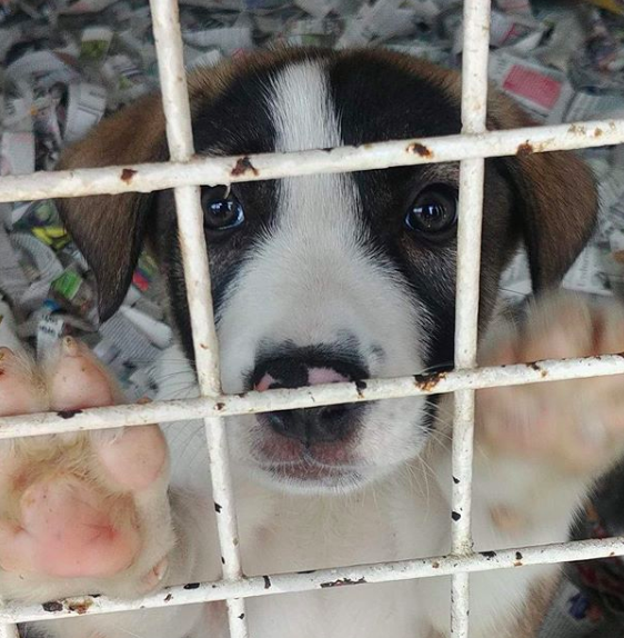 puppy waiting for his home at the Yedikule animal shelter in Istanbul at the