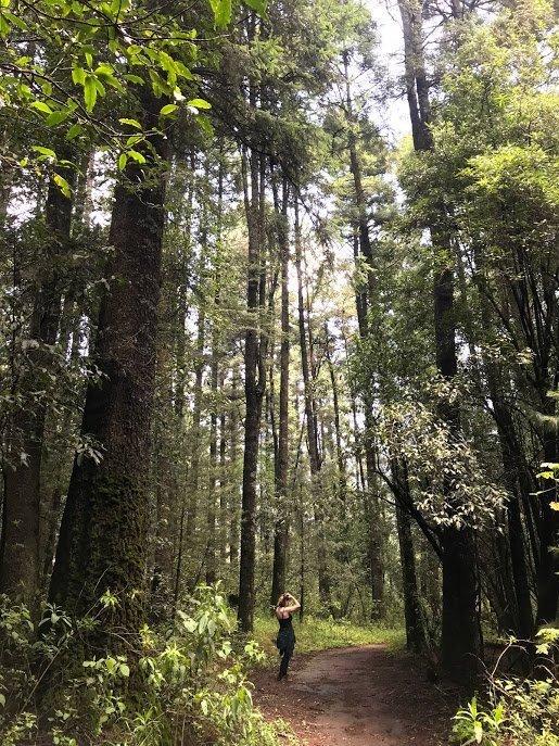 hiking trail in Desierto de Los Leones