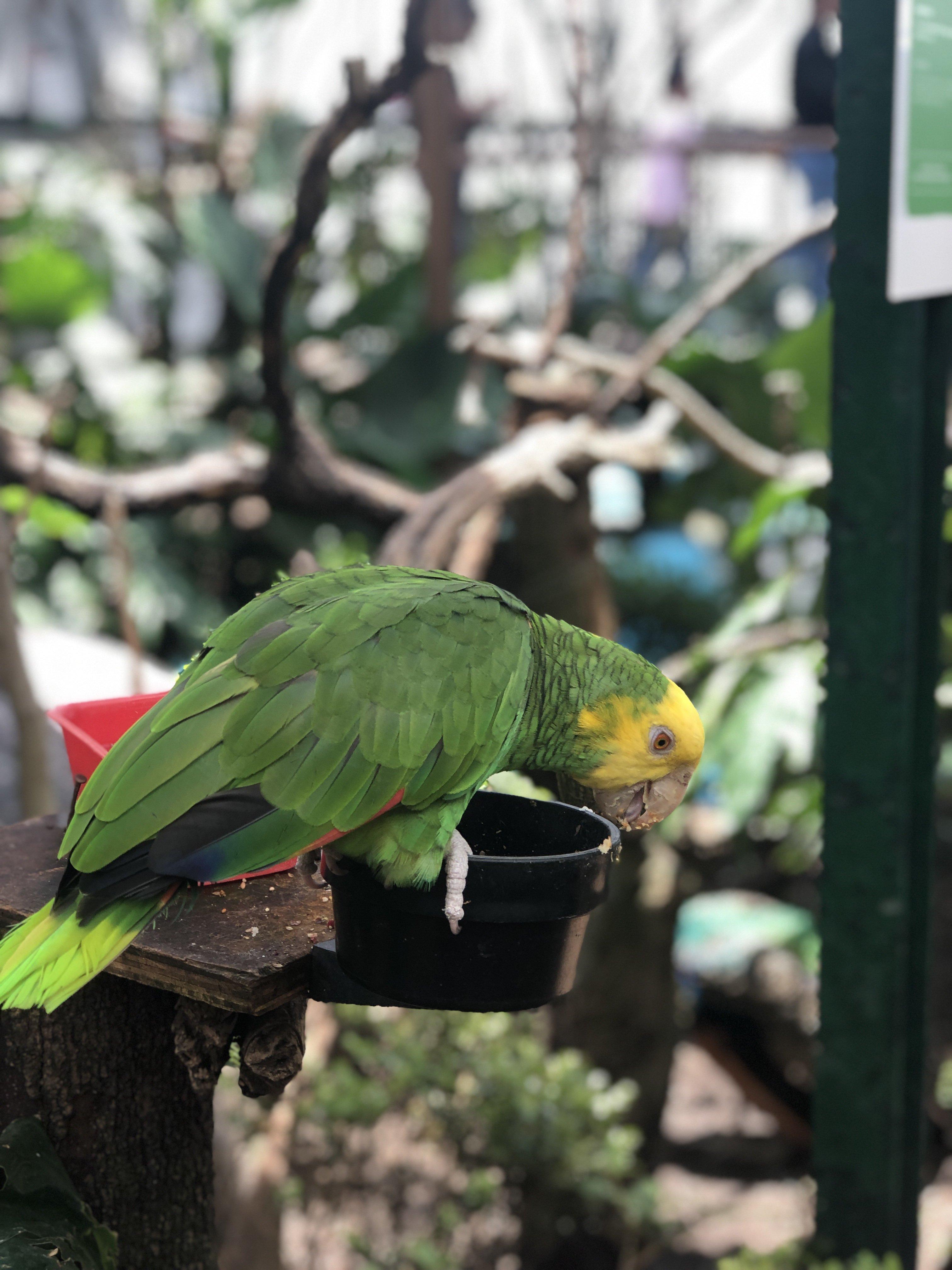 Lincoln Park Aviary in Polanco, CDMX
