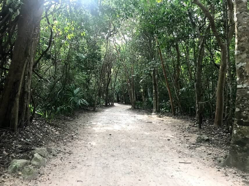 paths through the jungle in Coba