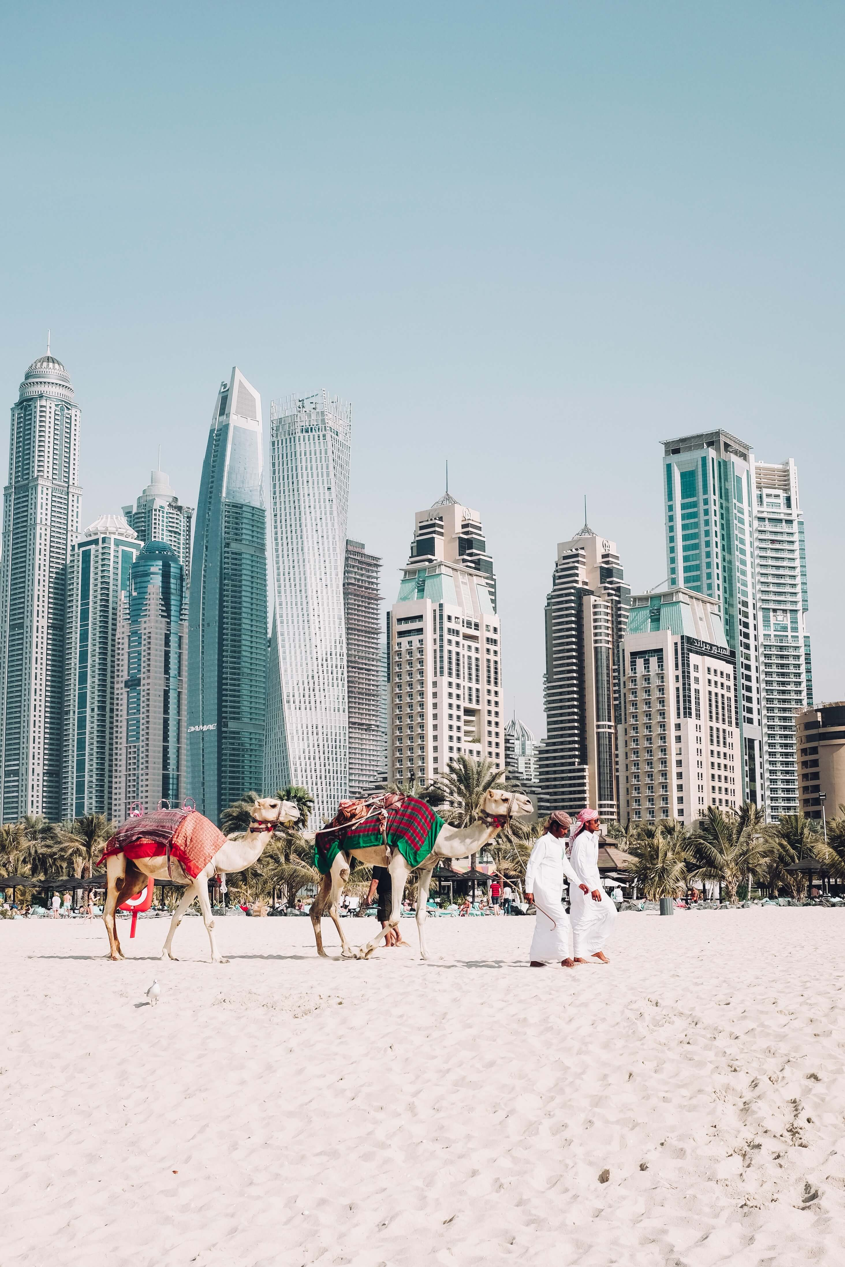 Dubai beach with camels
