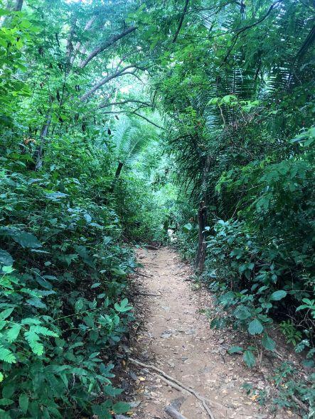 hiking through the jungle to Las Animas