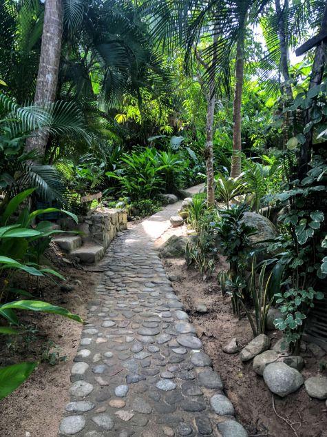 jungle path on the trek to Las Animas