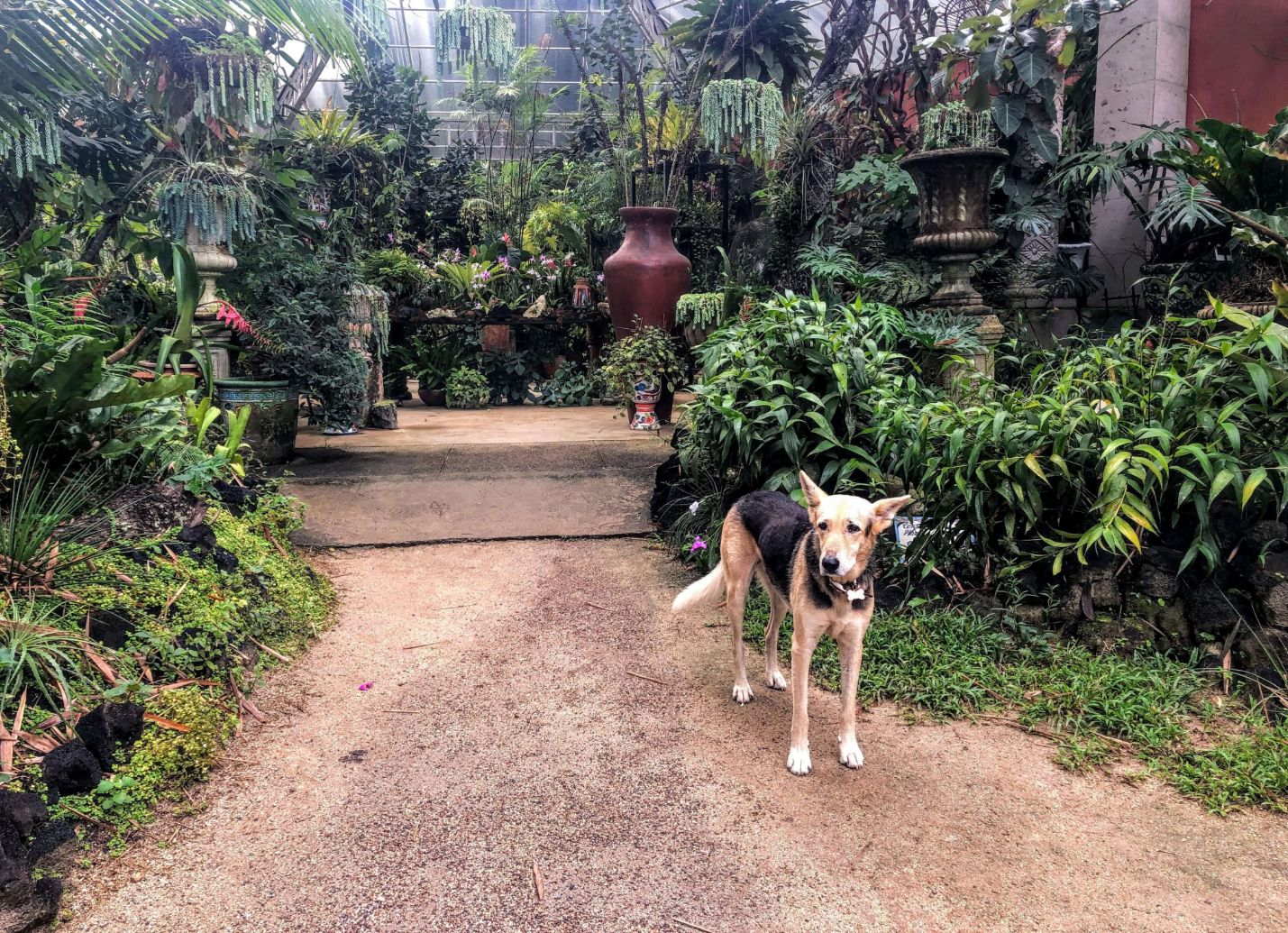 Domino the dog at the Vallarta Botanical Gardens