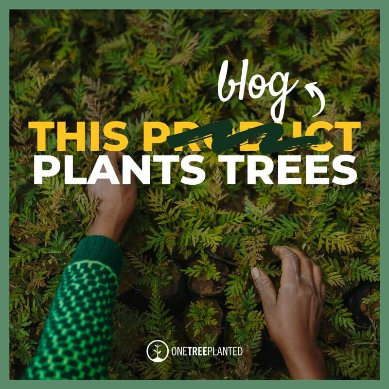 This Blog Plants Trees social media graphic