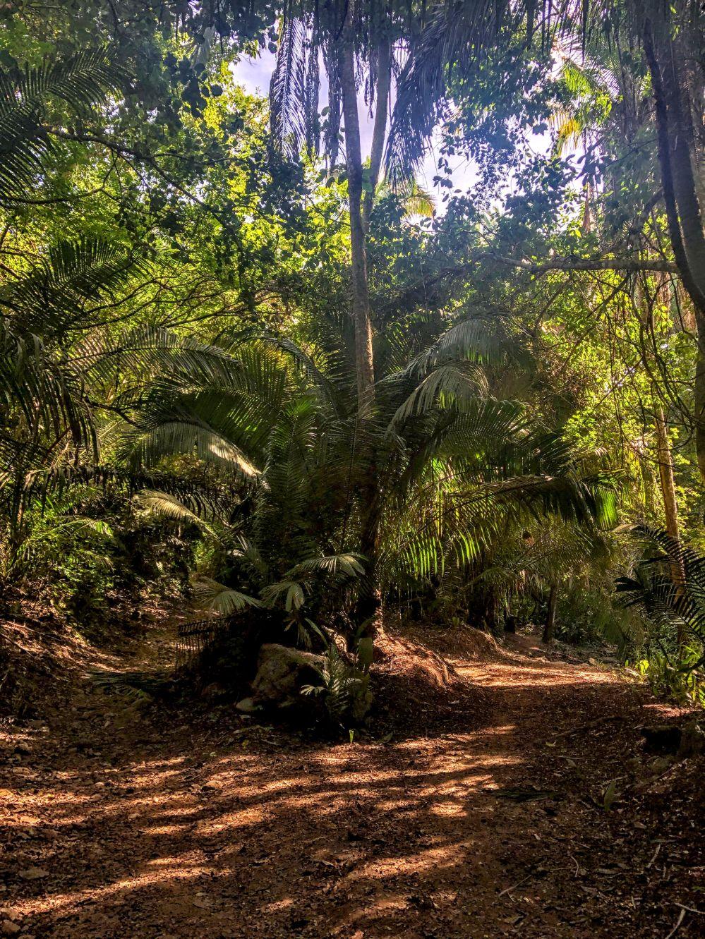 trail leading through a sunny jungle in Puerto Vallarta
