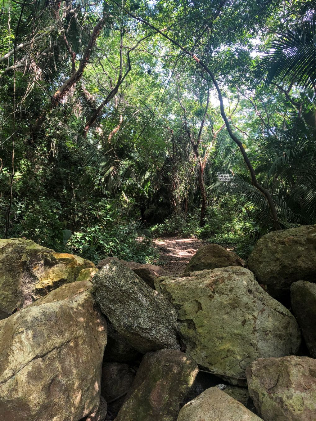 boulders on a jungle trail