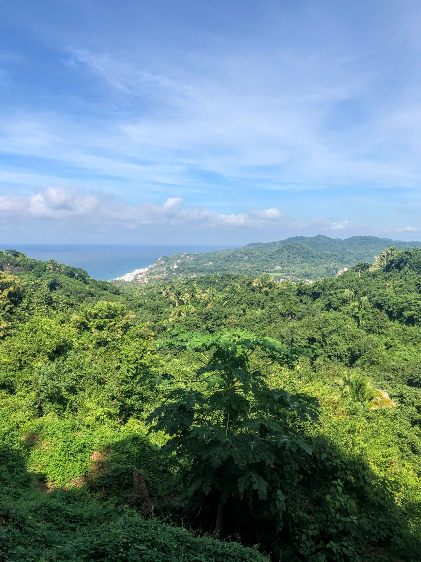 view of the jungle and coastline on the hike from Sayulita to San Pancho