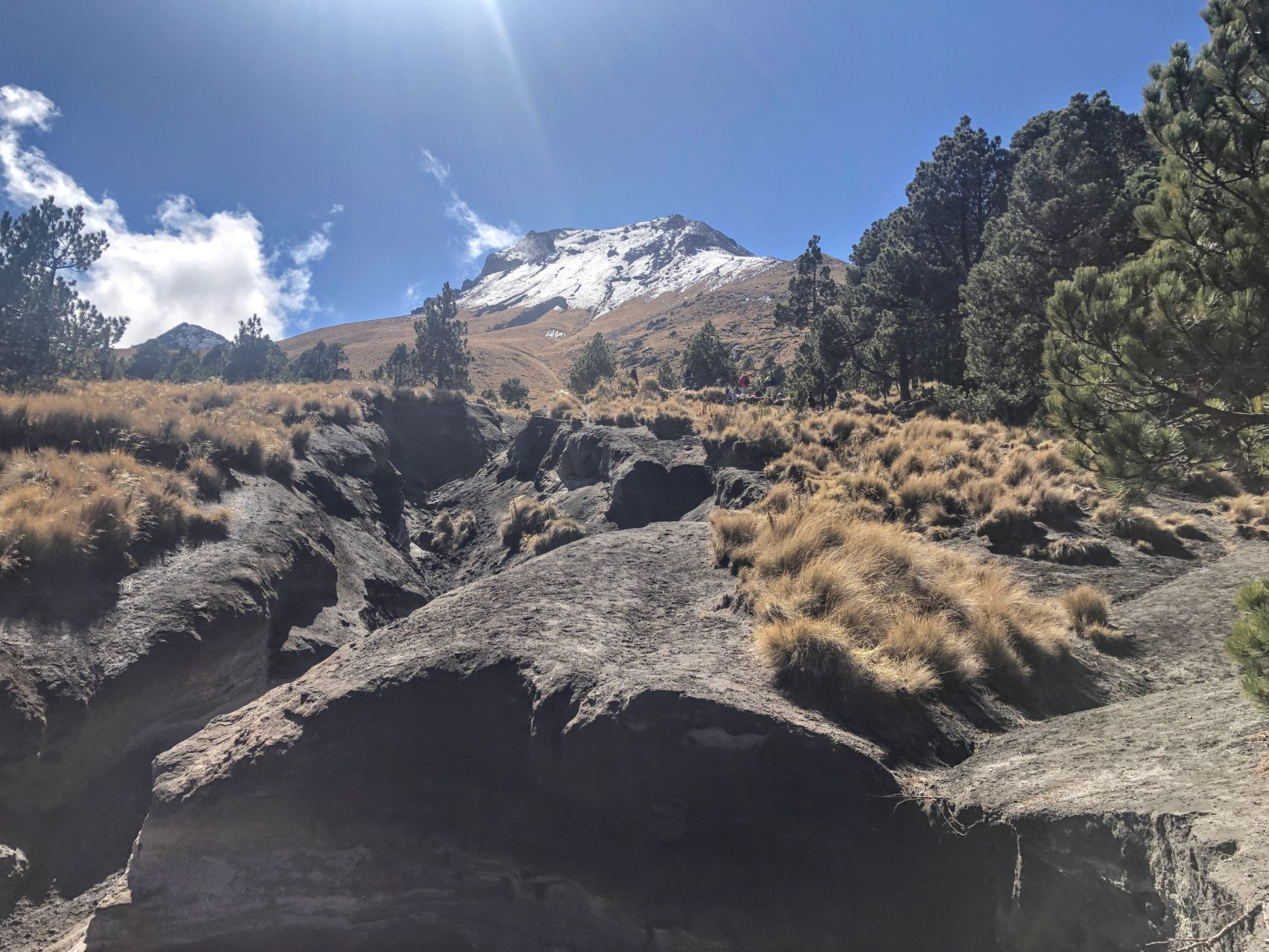 view of snow-caped Malinche from the field at the treeline