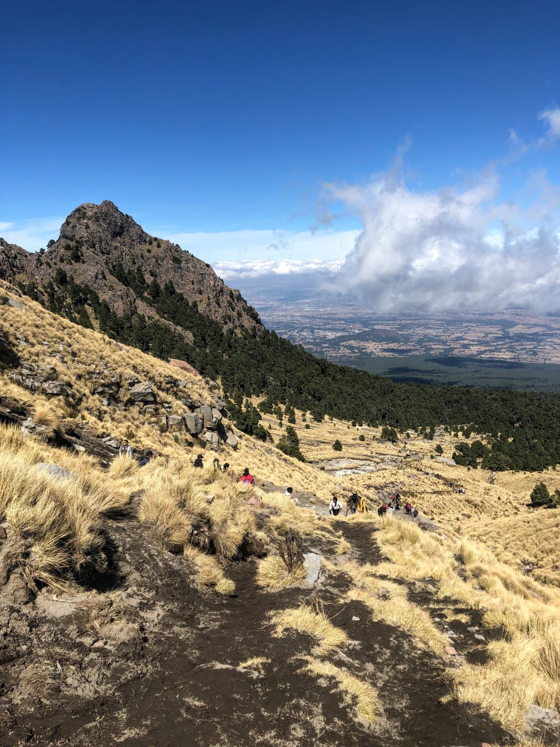 View of Malinche National Park from halfway up Malinche volcano