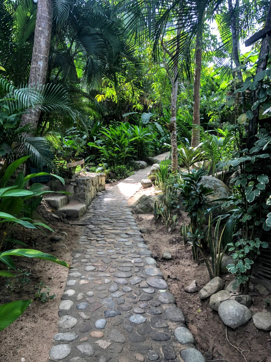 stone pathway through the jungle in Puerto Vallarta