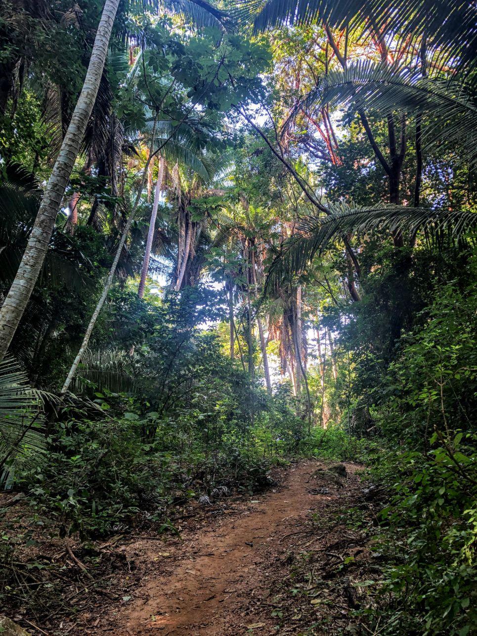 path winding through a lush green jungle on Monkey Mountain