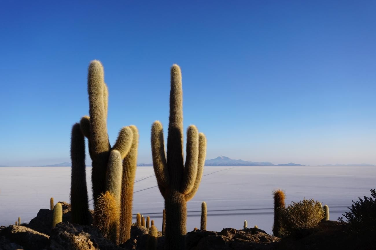 salt flats and cacti in Bolivia