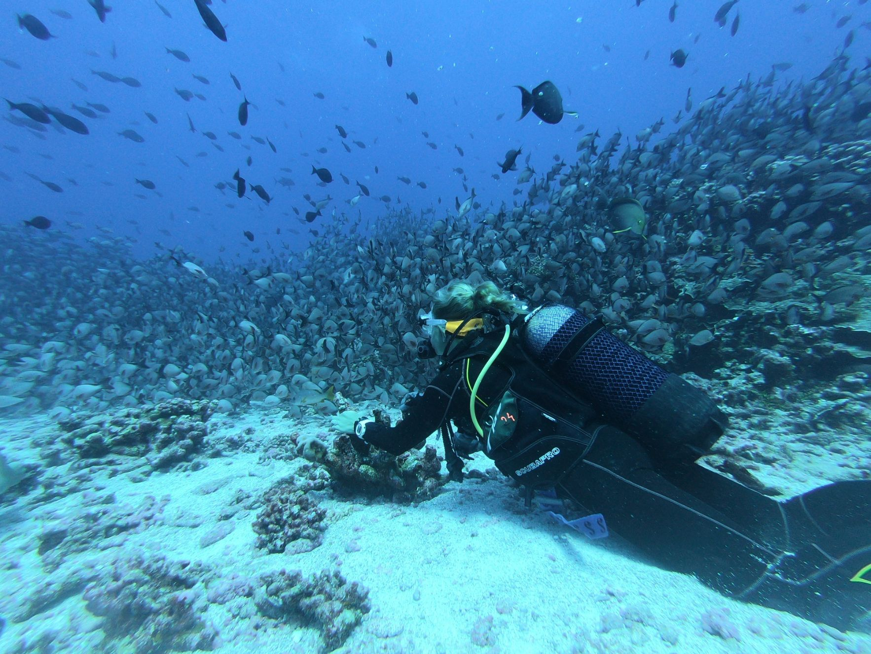 diver underwater with a school of fish and a coral reef