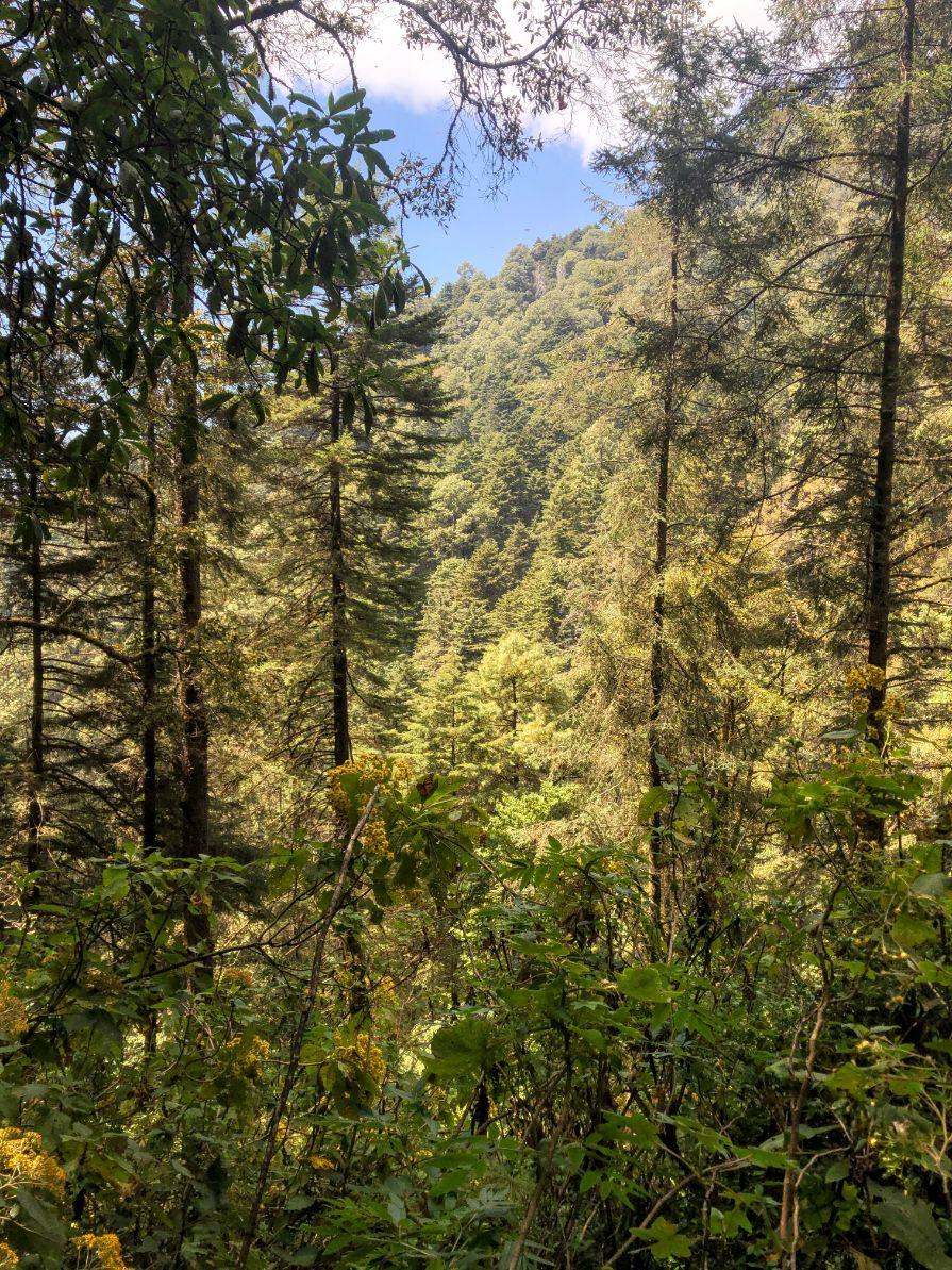 the Cerro Pelon monarch butterfly reserve in Michoacan