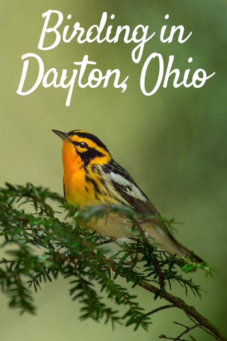 birding in Dayton Pinterest pin