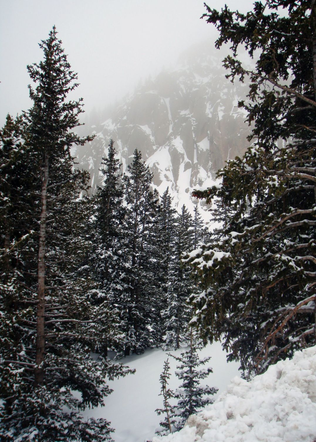 Winter scene with pine trees and fog in the mountains