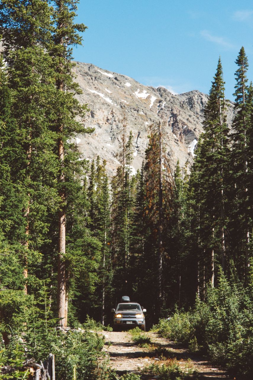 car driving in the forest with mountain and pine trees