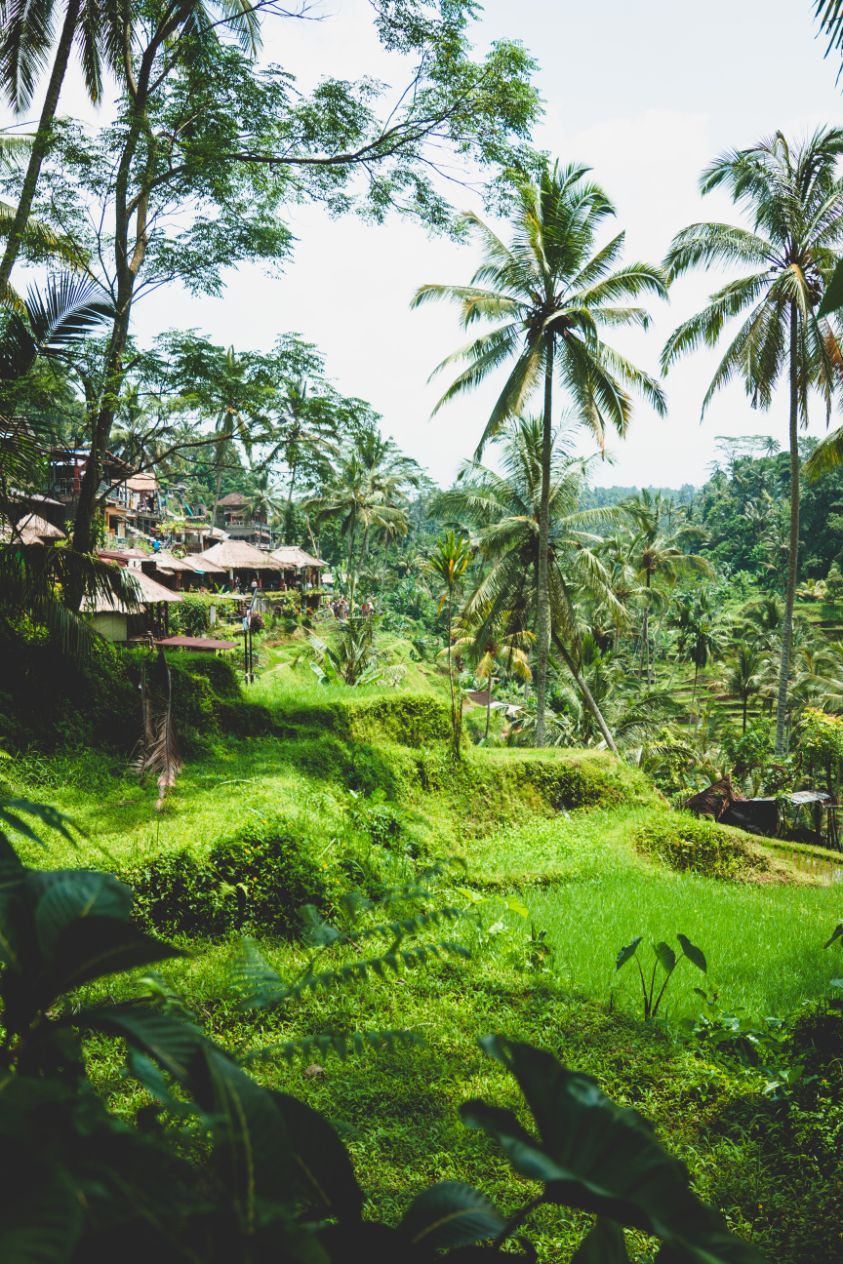 green jungle with hotel bungalows in Indonesia