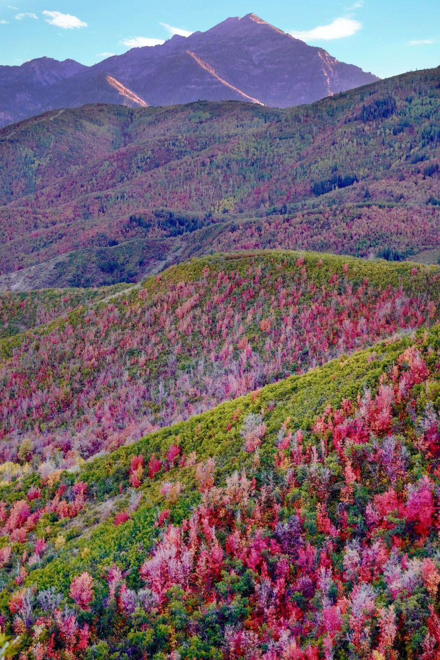 superbloom at Mount Timpanogos in Utah